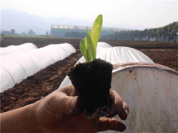 陕西88直播在线观看高清农业-有机肥,育苗基质案例展示